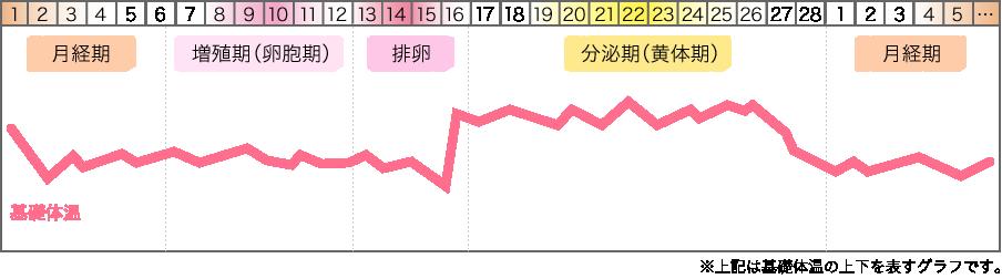 生理中 体重変化 グラフ